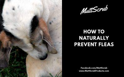 How To Naturally Prevent Fleas