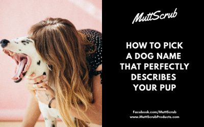 How To Pick A Dog Name That Perfectly Describes Your Pup
